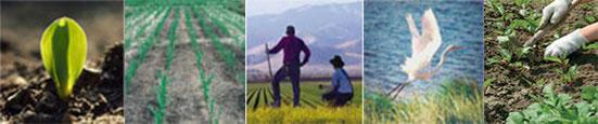 5 Преимуществ выбора Сертифицированной органической продукции